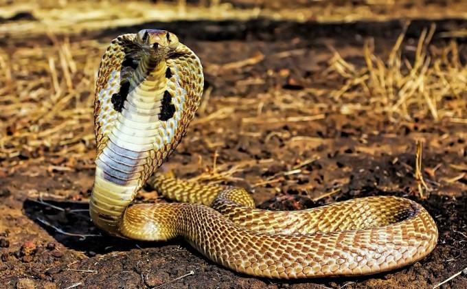 mơ thấy rắn màu trắng là điềm gì báo hiệu điều gì?