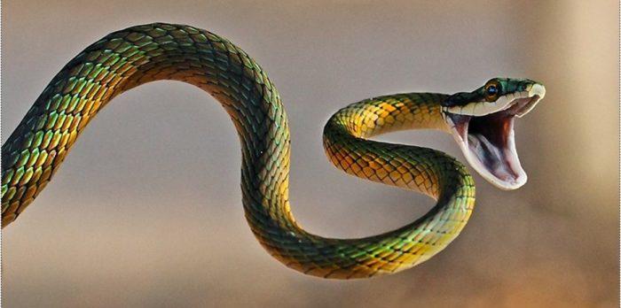 Nằm mơ thấy rắn 2 đầu 3 đầu bò vào nhà bạn nên làm gì