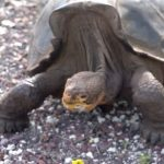 Discoveries in the Galápagos: A Longtime Partnership   California Academy of Sciences