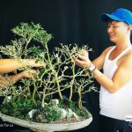 – Pruning my fir forest. Tai Le